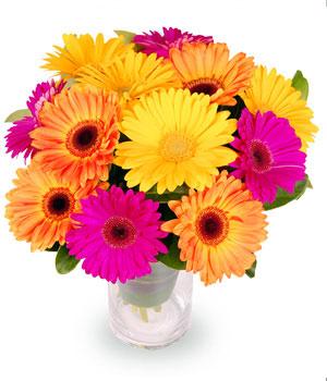 Livraison de Fleurs Bouquet gerberas colorés