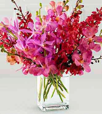 Livraison de Fleurs Orchidées