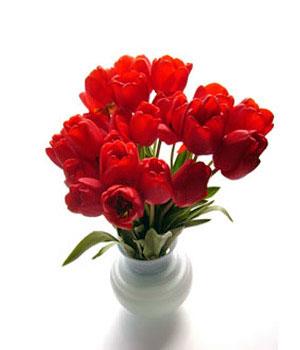 Buchet livraison floraria franceza for Livraison tulipes